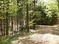 Wanderwege Bayerischer Wald