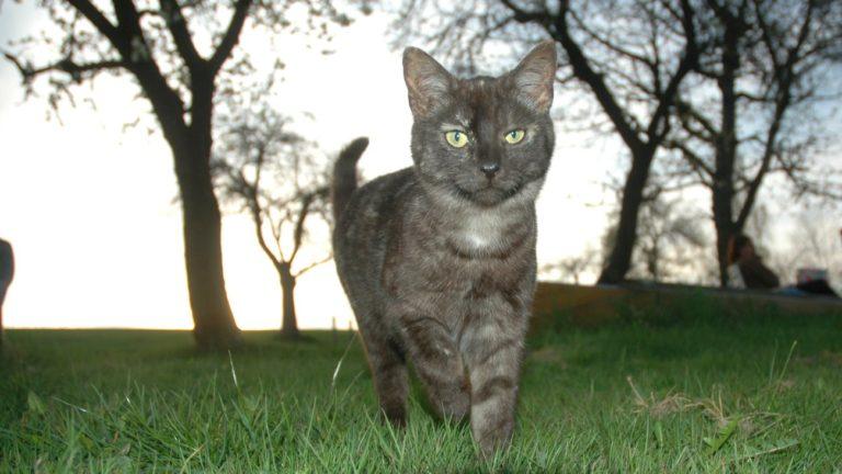 gschwandnerhof-bauernhoftiere-katzen