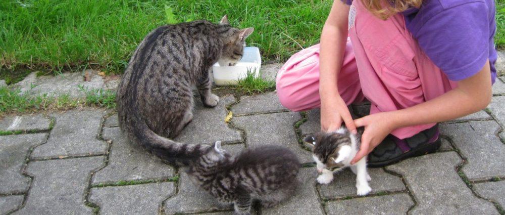 gschwandnerhof-bauernhoftiere-katzen-streicheln-miezis