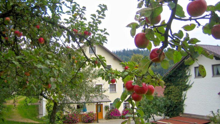 herbsturlaub-bayerischer-wald-ferienhaus-apfelbaum